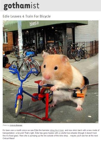 Edie Bike Gothamist